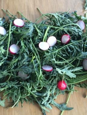 kale radish 1 sml